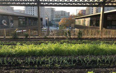 L'agriculture urbaine [AVEC Akebia]
